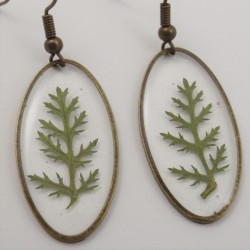 Achillea Earrings Bronze Oval