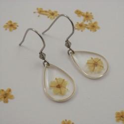 Single Blossom Elderflower...