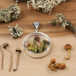 Terrarium Moss and Mushroom...